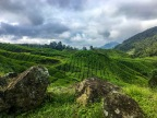 Backpacking the Cameron Highlands